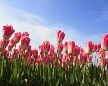 Konkurs Wiosna i Wy rozstrzygnięty!